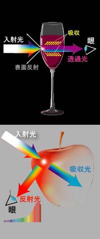 カラー 入射光、反射光