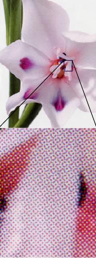 http://illustrator-ok.com/illustrator_koza/color/color_asset/flower_amiten.jpg