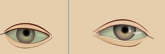 グラデーションメッシュ ビーナスを描く 目