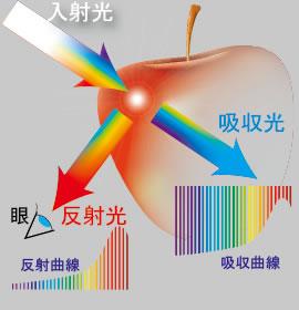 apple_hansya.jpg